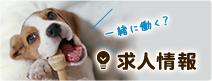 名古屋で土日祝日診療の動物病院パール犬猫病院の採用情報