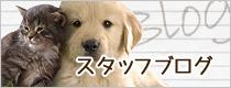 名古屋で土日祝日診療の動物病院パール犬猫病院のスタッフブログ